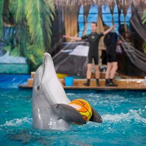 Дельфинарии, океанариумы Некрасовского