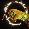 Цирки в Некрасовском
