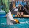 Дельфинарии, океанариумы в Некрасовском
